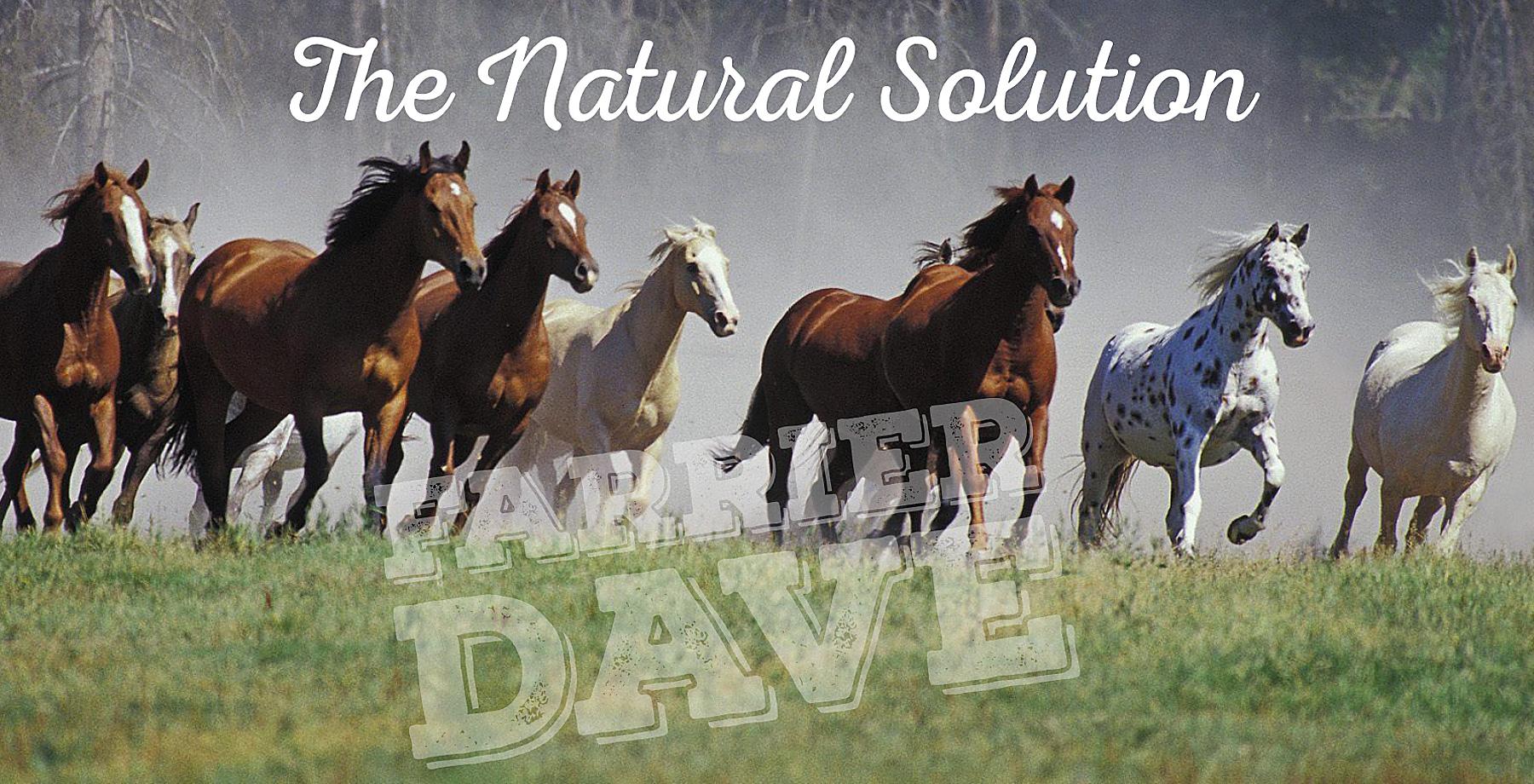 The Natural Solution - Farrier Dave
